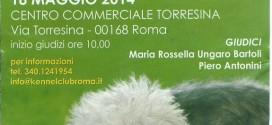 Terza esposizione regionale canina di Roma