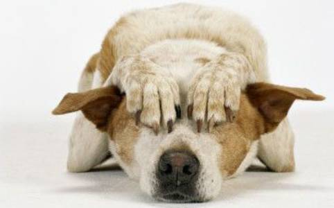 Ciao Filippo altro cane libero di Torresina